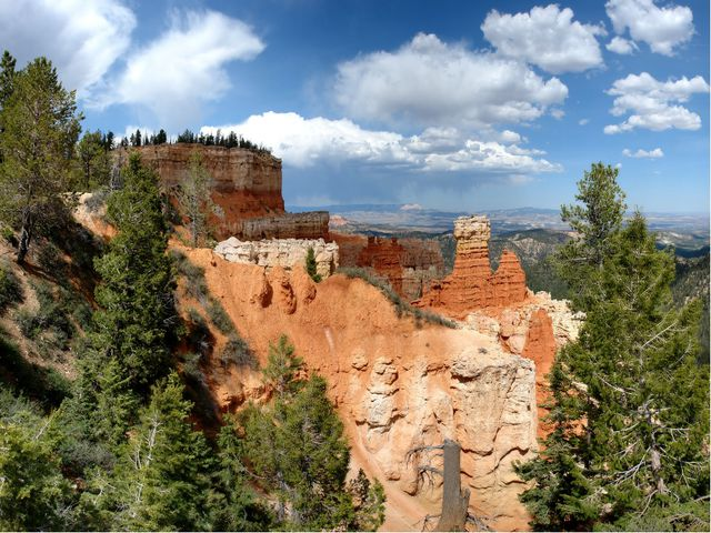 Природа На северных склонах Большого каньона растут девственные хвойные и лис...