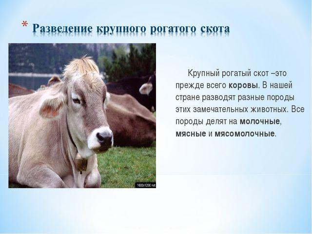 Крупный рогатый скот –это прежде всего коровы. В нашей стране разводят разн...