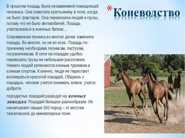 В прошлом лошадь была незаменимой помощницей человека. Она помогала крестьян...