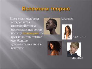 Цвет кожи человека определяется взаимодействием нескольких пар генов по типу
