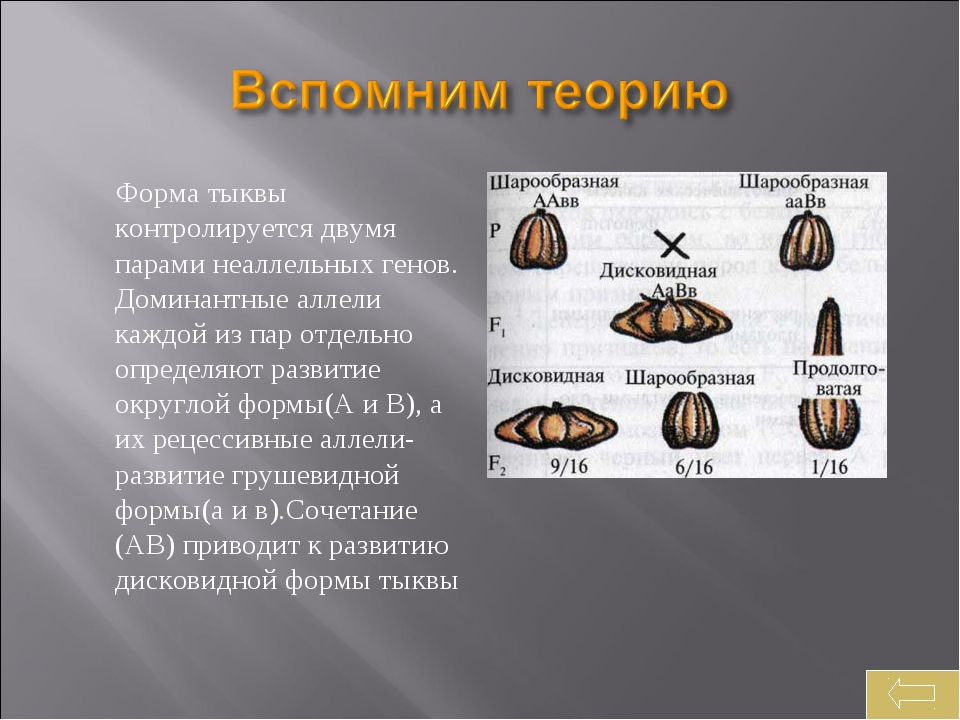 Форма тыквы контролируется двумя парами неаллельных генов. Доминантные аллел...