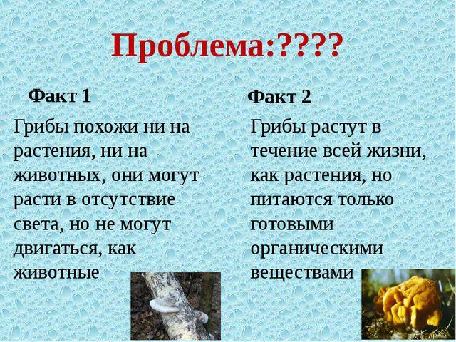 Проблема:???? Факт 1 Грибы похожи ни на растения, ни на животных, они могут р...