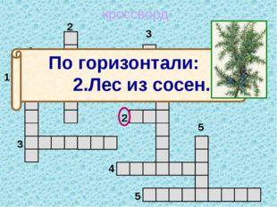 кроссворд 1 2 3 4 5 5 4 3 2 1 м о ж ж е в е л ь н и к По горизонтали: 2.Лес