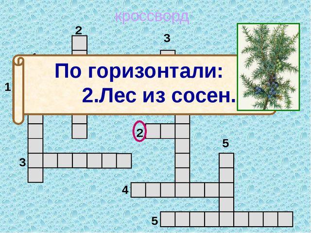 кроссворд 1 2 3 4 5 5 4 3 2 1 м о ж ж е в е л ь н и к По горизонтали: 2.Лес...