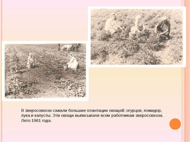 В зверосовхозе сажали большие плантации овощей: огурцов, помидор, лука и кап...