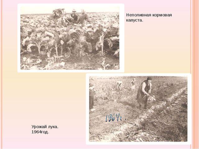 Неполивная кормовая капуста. Урожай лука. 1964год.