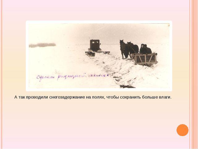 А так проводили снегозадержание на полях, чтобы сохранить больше влаги.