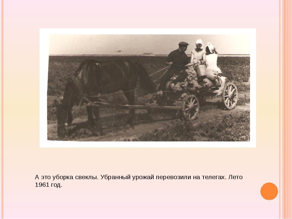 А это уборка свеклы. Убранный урожай перевозили на телегах. Лето 1961 год.