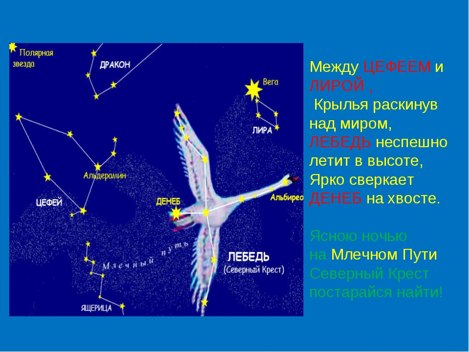 Между ЦЕФЕЕМ и ЛИРОЙ , Крылья раскинув над миром, ЛЕБЕДЬ неспешно летит в вы...