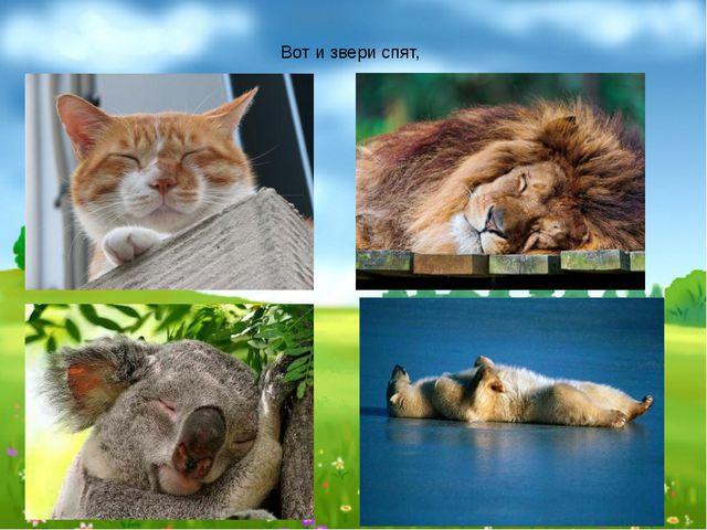 Вот и звери спят,