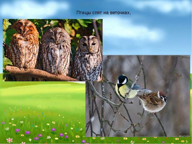 Птицы спят на веточках,