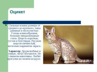 Оцикет Сильные кошки размера от среднего до крупного, лапы длинные и мускулис