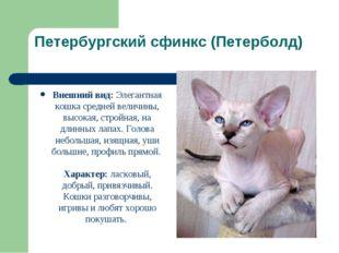 Петербургский сфинкс (Петерболд) Внешний вид: Элегантная кошка средней величи
