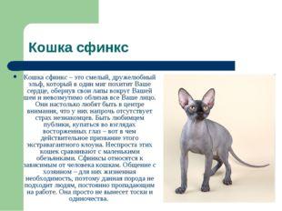 Кошка сфинкс Кошка сфинкс – это смелый, дружелюбный эльф, который в один миг