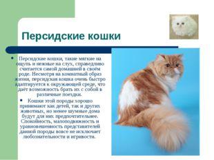 Персидские кошки Персидские кошки, такие мягкие на ощупь и нежные на слух, сп