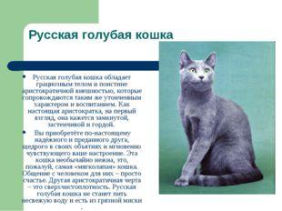 Русская голубая кошка Русская голубая кошка обладает грациозным телом и поист
