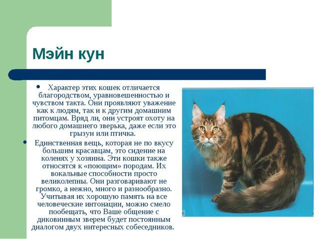 Мэйн кун Характер этих кошек отличается благородством, уравновешенностью и чу...