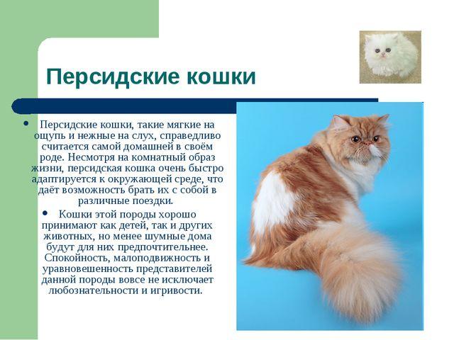 Персидские кошки Персидские кошки, такие мягкие на ощупь и нежные на слух, сп...