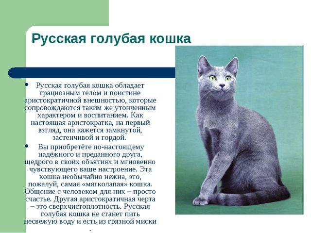 Русская голубая кошка Русская голубая кошка обладает грациозным телом и поист...