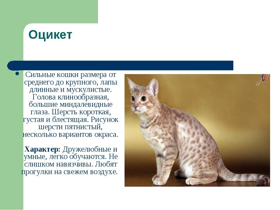 Породы кошек картинки с описанием и схемами