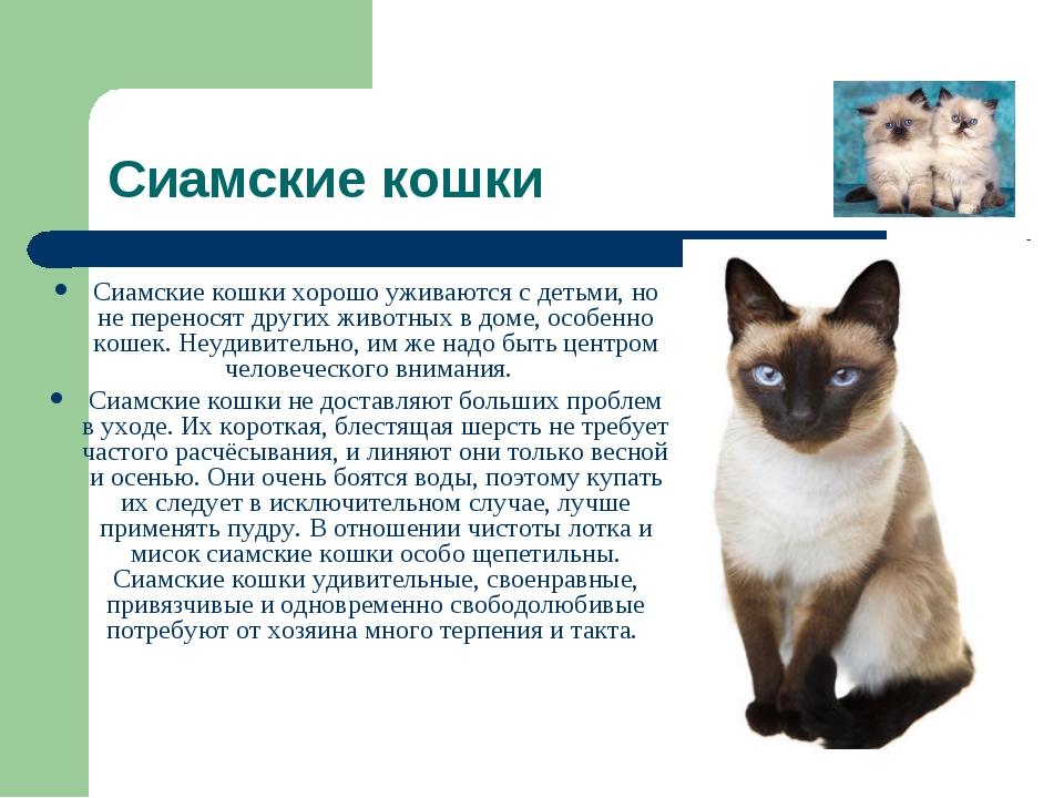 Уход за кошкой сиамской кошки