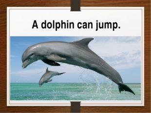 A dolphin can jump.
