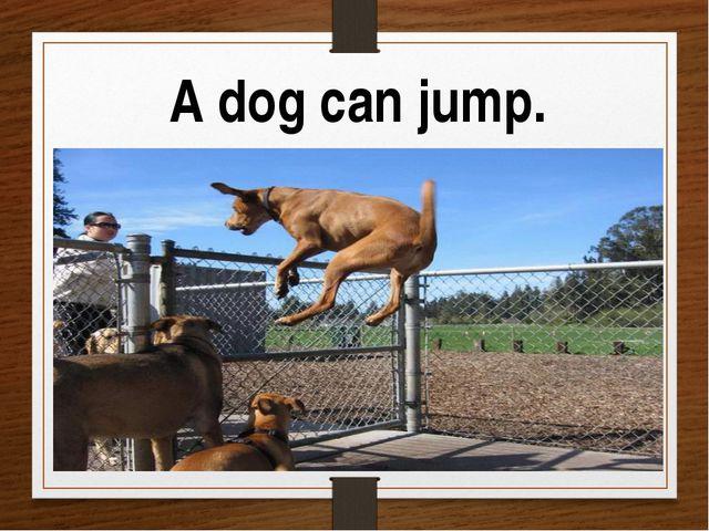A dog can jump.