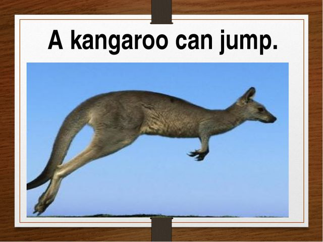 A kangaroo can jump.