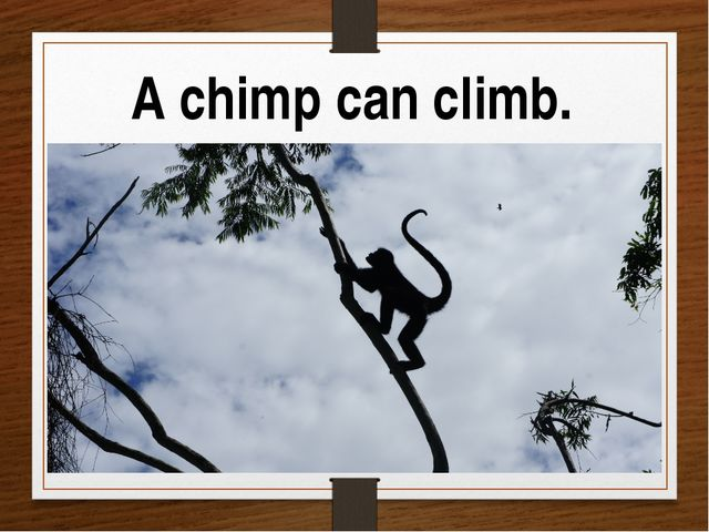 A chimp can climb.