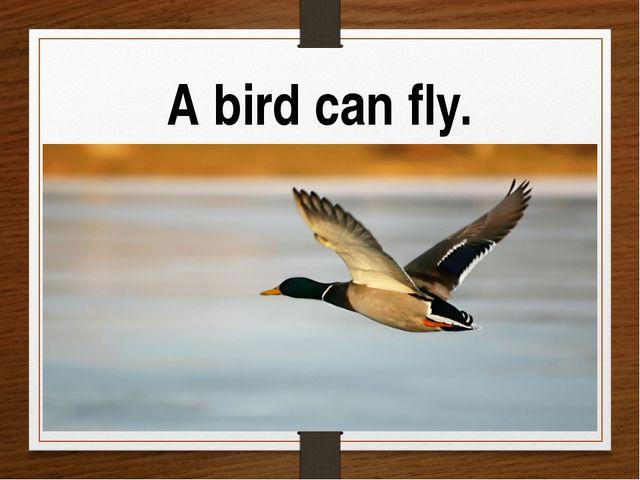 A bird can fly.