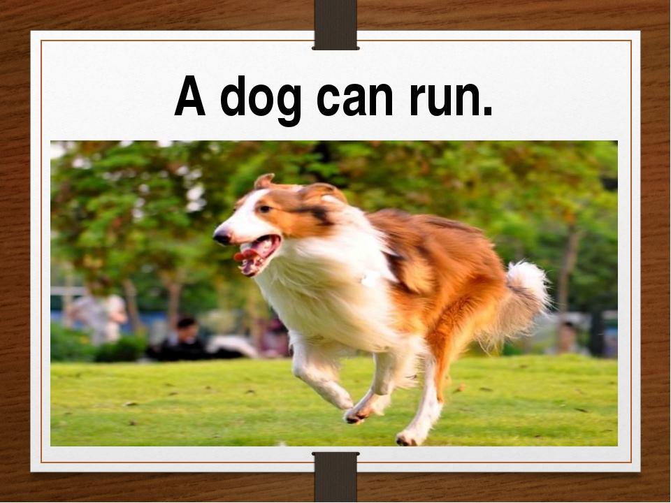 A dog can run.