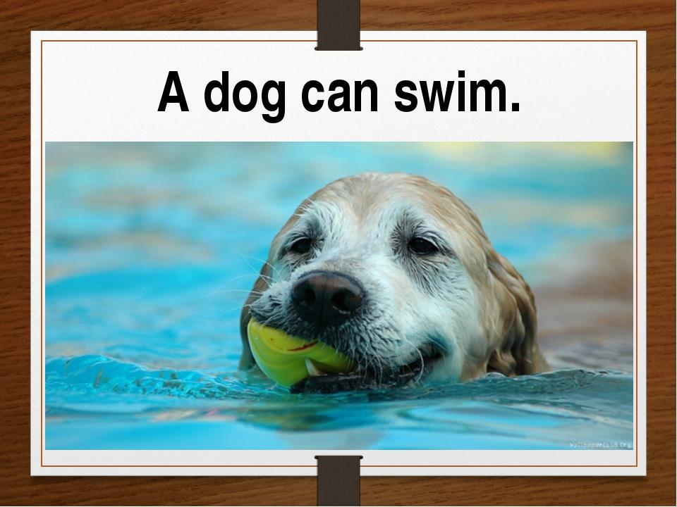 A dog can swim.