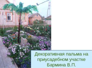 Декоративная пальма на приусадебном участке Бармина В.П.