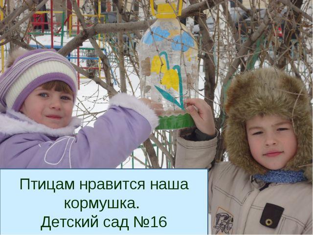 Птицам нравится наша кормушка. Детский сад №16