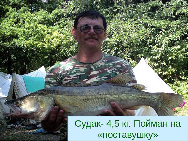 Судак- 4,5 кг. Пойман на «поставушку»