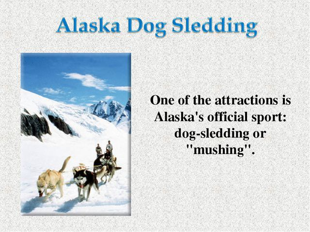 "One of the attractions is Alaska's official sport: dog-sledding or ""mushing""."