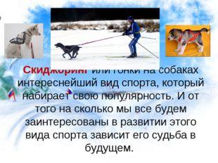 Скиджоринг или гонки на собаках интереснейший вид спорта, который набирает св
