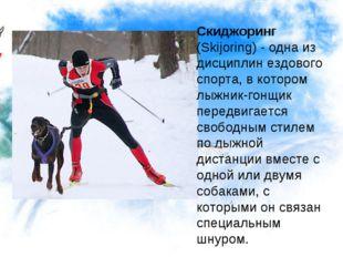 Скиджоринг (Skijоring) - одна из дисциплин ездового спорта, в котором лыжник-