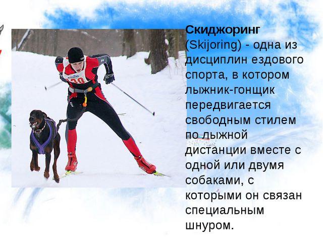 Скиджоринг (Skijоring) - одна из дисциплин ездового спорта, в котором лыжник-...
