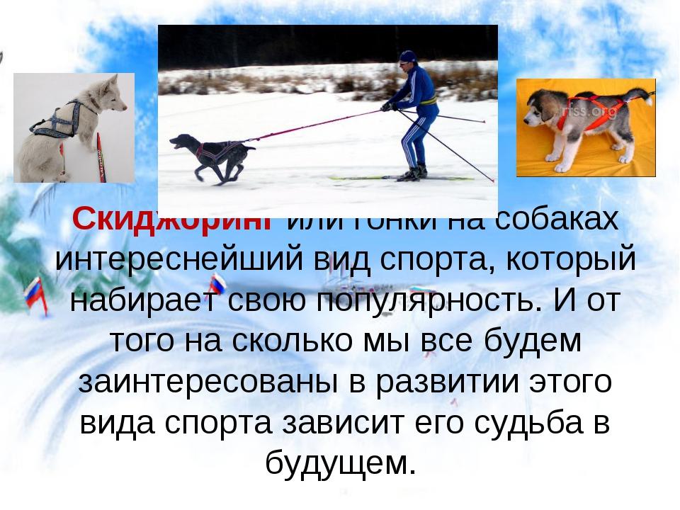 Скиджоринг или гонки на собаках интереснейший вид спорта, который набирает св...