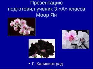 Презентацию подготовил ученик 3 «А» класса Моор Ян Г. Калинингград