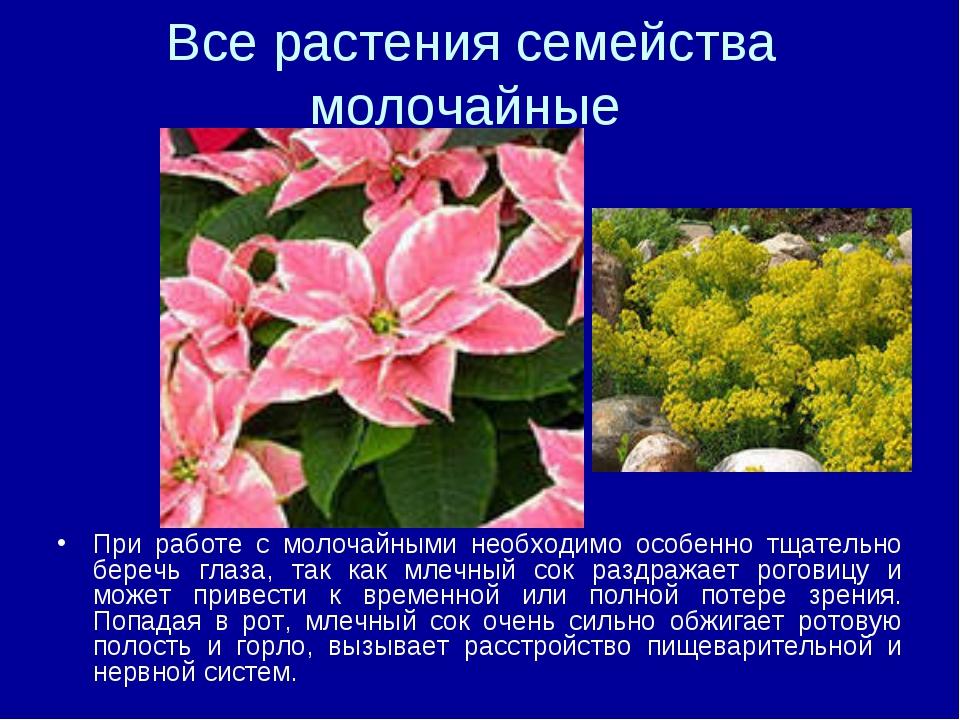 Все растения семейства молочайные При работе с молочайными необходимо особенн...