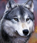 Загадки про волка