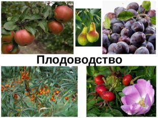 Плодоводство