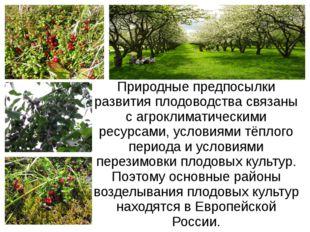 Природные предпосылки развития плодоводства связаны с агроклиматическими ресу
