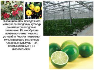 Выращиванием посадочного материала плодовых культур занимаются плодовые питом
