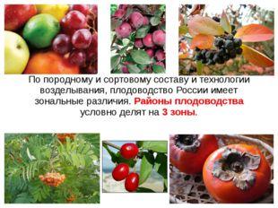 По породному и сортовому составу и технологии возделывания, плодоводство Росс