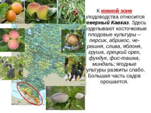 К южной зоне плодоводства относится Северный Кавказ. Здесь возделывают косточ