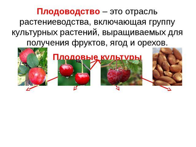 Плодоводство – это отрасль растениеводства, включающая группу культурных раст...