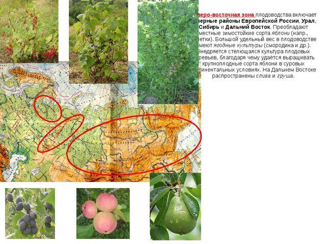 Северо-восточная зона плодоводства включает северные районы Европейской Росси...